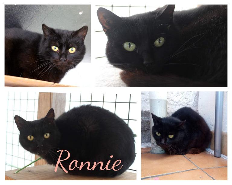 RONNIE [SOS]