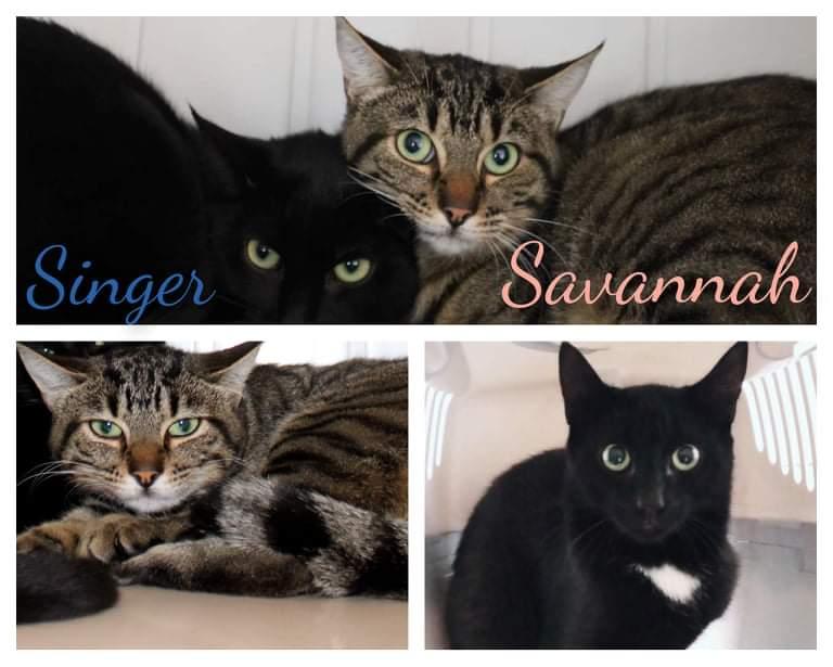 SINGER &  SAVANNAH