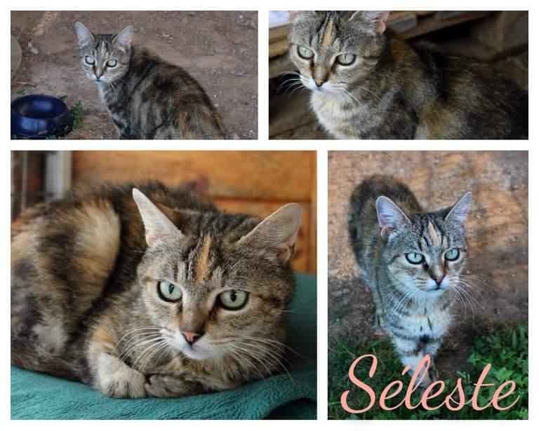 SELESTE [SOS]